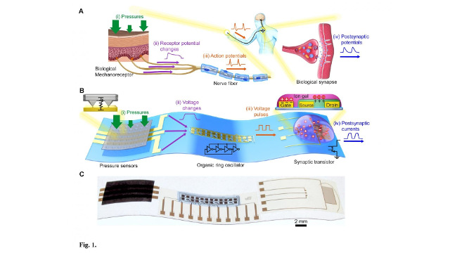Seoul National University | Stanford University - Flexible organic electronics mimic biological mechanosensory nerves